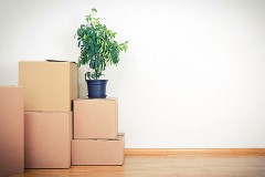 cardboard boxes and houseplant in an unfurnished apartment